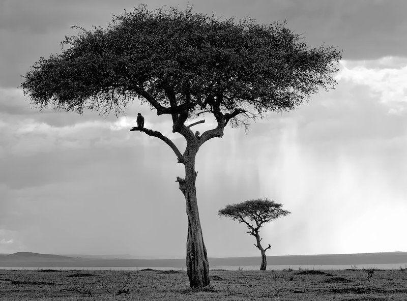 саванна, африка, кения, масаи мара Саваннаphoto preview