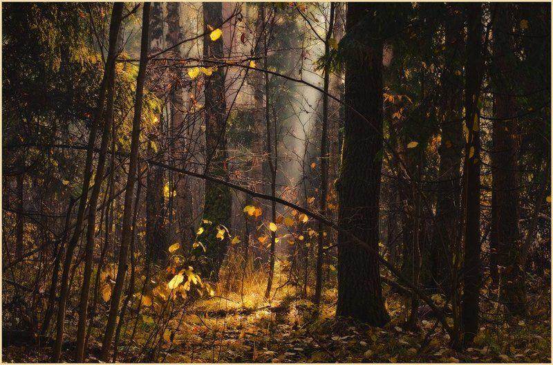 свет, осенний лес, луч света про светphoto preview