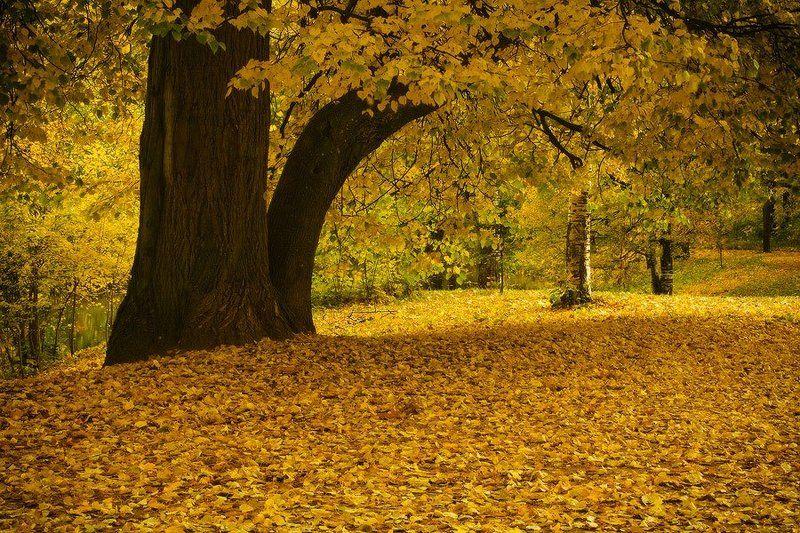 Осенняя аллеяphoto preview