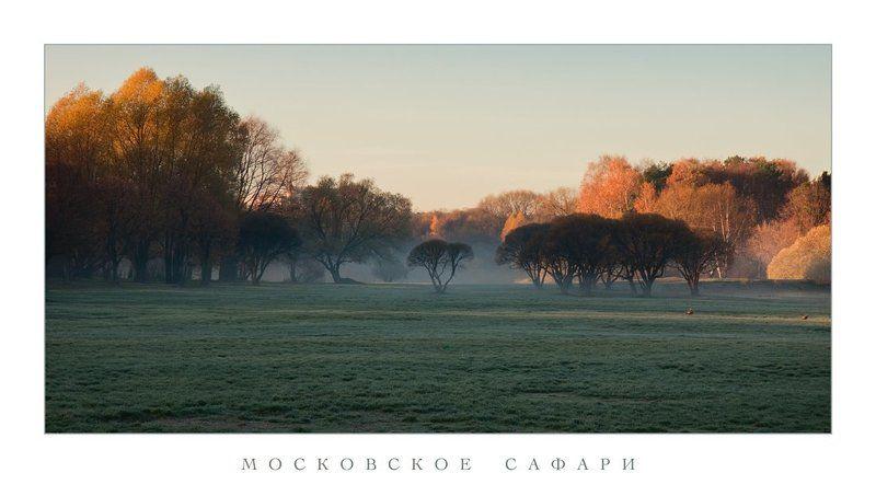 парк, осень, туман, на озерах Московское сафариphoto preview
