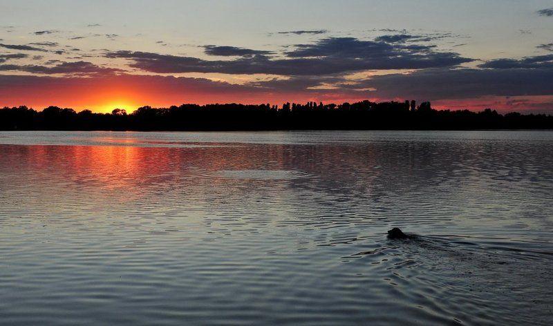 закат, река, днепр, собака, облака На закате..photo preview