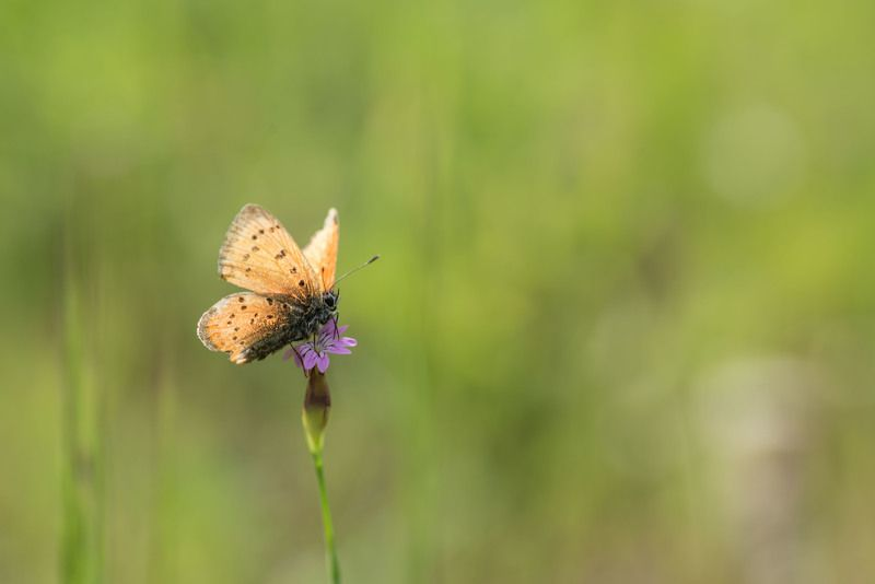 Butterfly, yellow, small flower, Llonley Butterflyphoto preview
