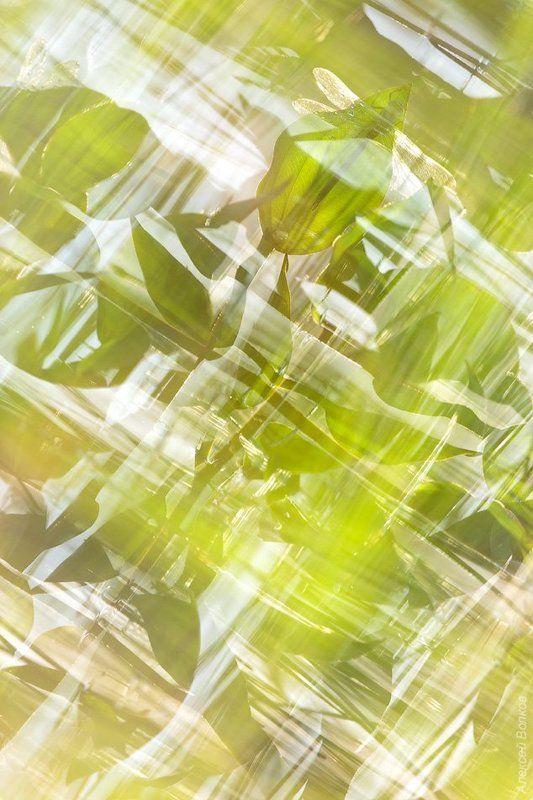 коромысло синее, стрекоза, природа Калейдоскопphoto preview