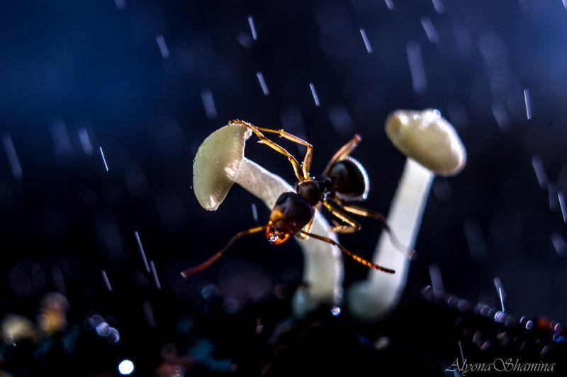 Под звёздным дождём...photo preview