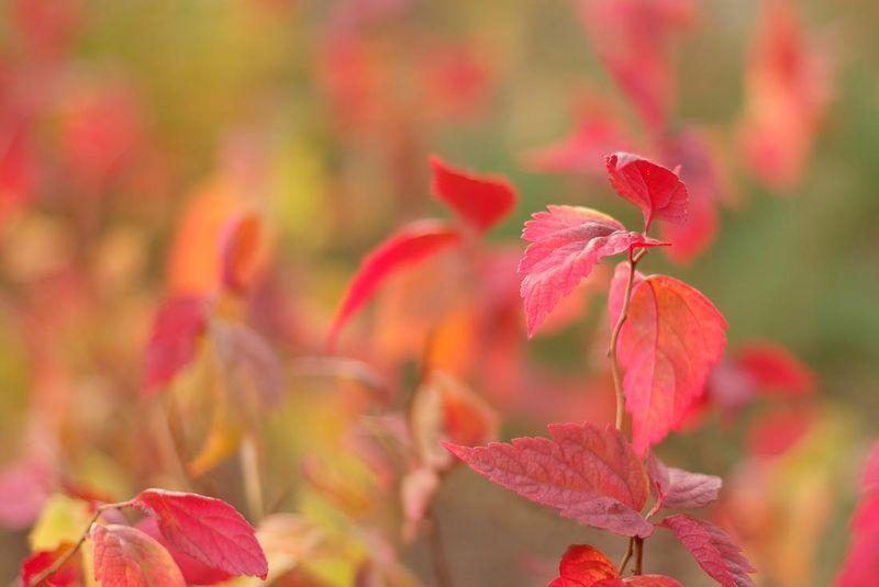 осень осенние акварелиphoto preview