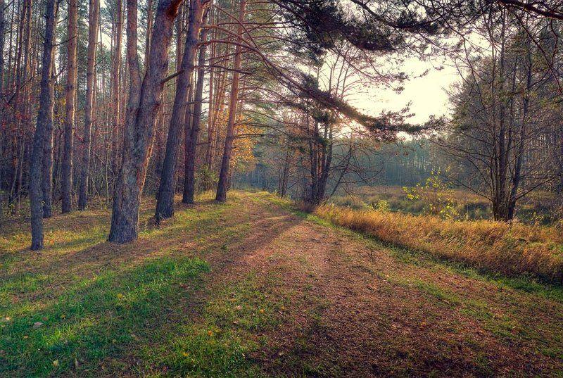 утро, осень, пейзаж осенним утромphoto preview