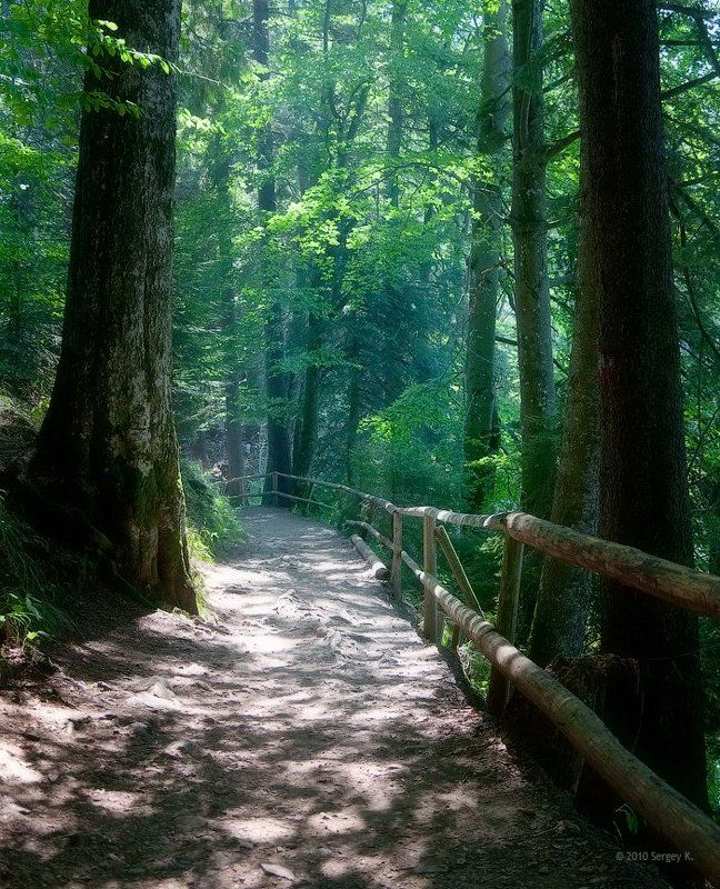 лес, карпаты, синевир, закарпатье, природа Дорога к озеруphoto preview