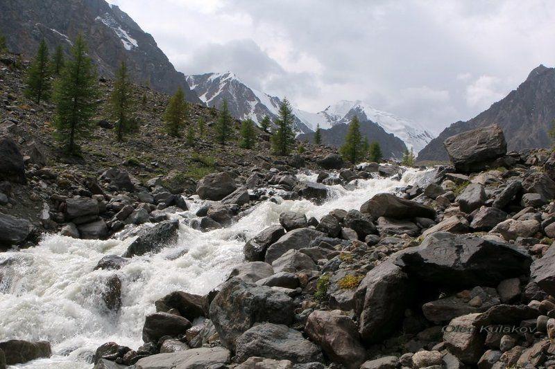 ущелье актру,горный алтай,горы В ущелье Актру.photo preview