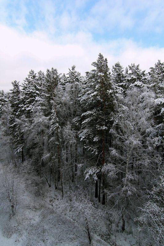 Там где живут белки...Первый снег...Пришла зима...photo preview