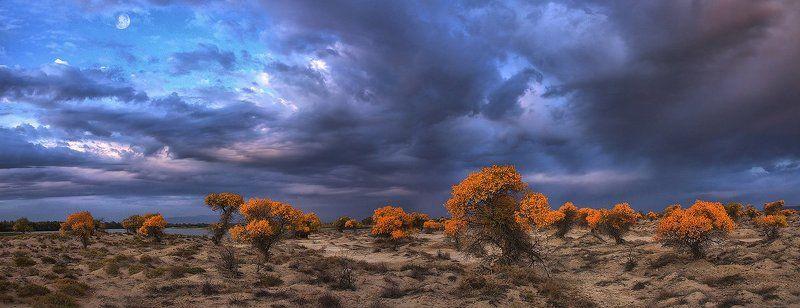 казахстан, алтын-емель, туранга осень в степиphoto preview