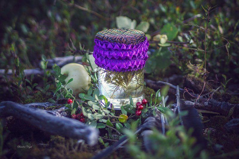 тропа, лес, болото,ведьма По тропе лесной ведьмыphoto preview