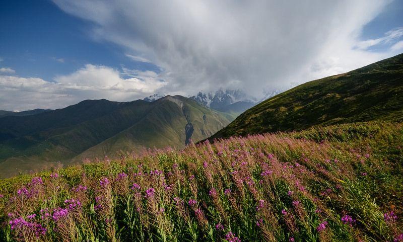 кавказ, caucasus, горы На цветущих высотахphoto preview