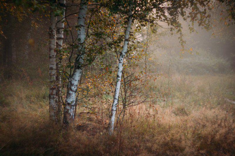 фото, природа, лес, дубна, россия Субботнее утроphoto preview