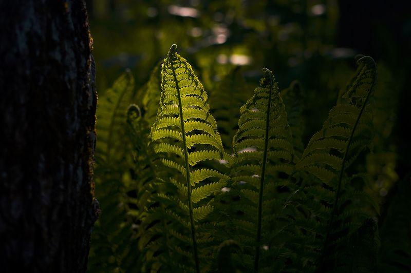 Вечер в папоротниковом лесуphoto preview