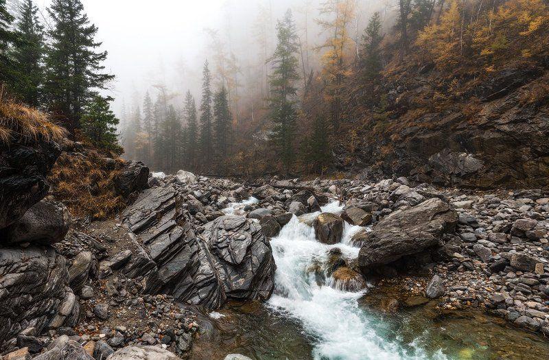 река, деревья, аршан, бурятия, кыргынга, туман, Туманы Бурятииphoto preview