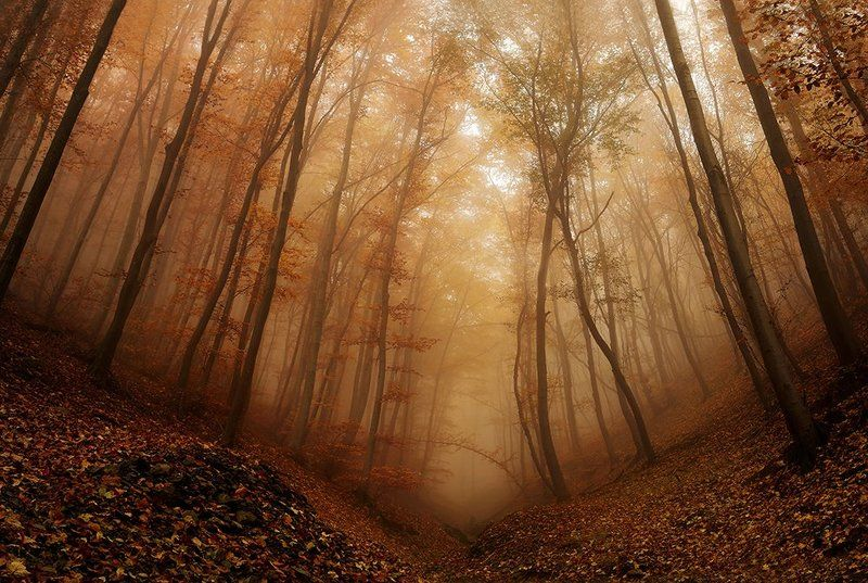 Autumn impressionphoto preview