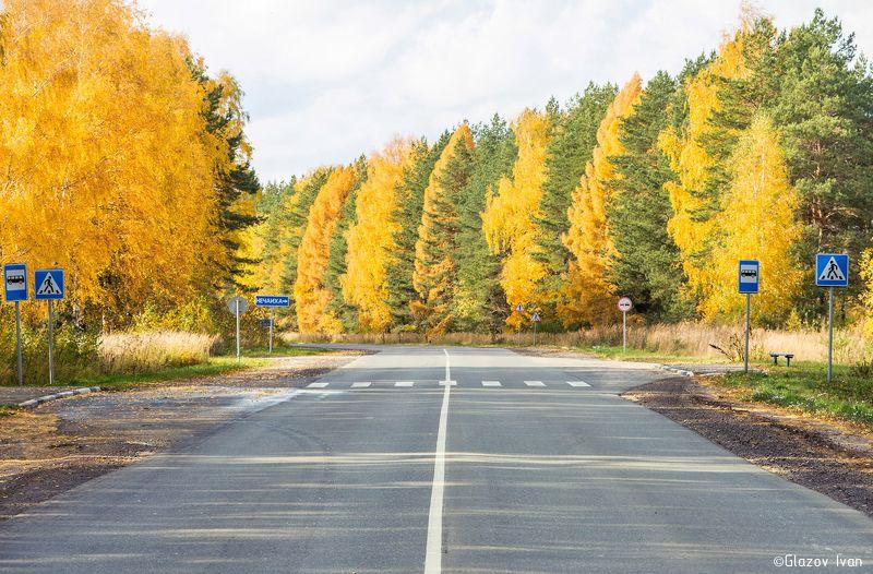 Осень выделит лиственницу из игольчетых деревьев)photo preview