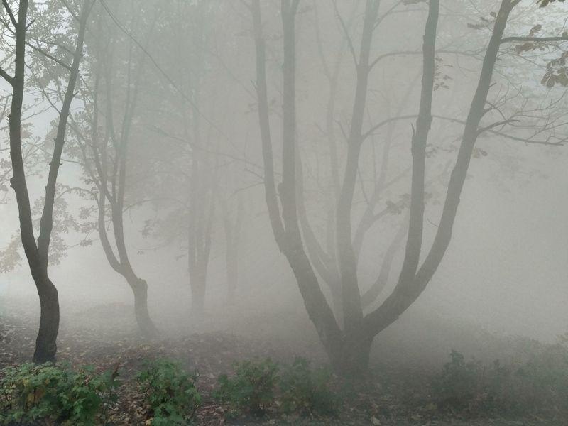 Осень...photo preview