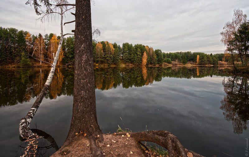 осень, пруд, лес, природа, пейзаж Золотая проседь...photo preview