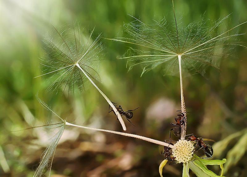 муравьи,макро, Первый пошелphoto preview