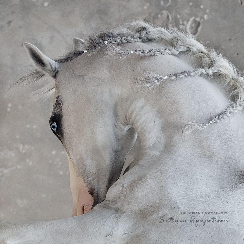horse, лошадь, лошади, details, portrait expressionphoto preview