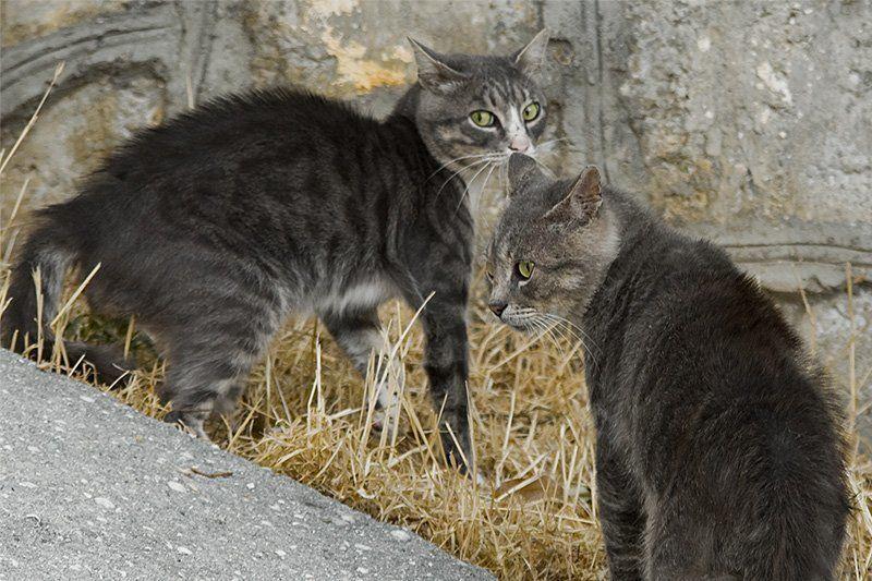 кот, драка Шёл-бы ты, дядяphoto preview