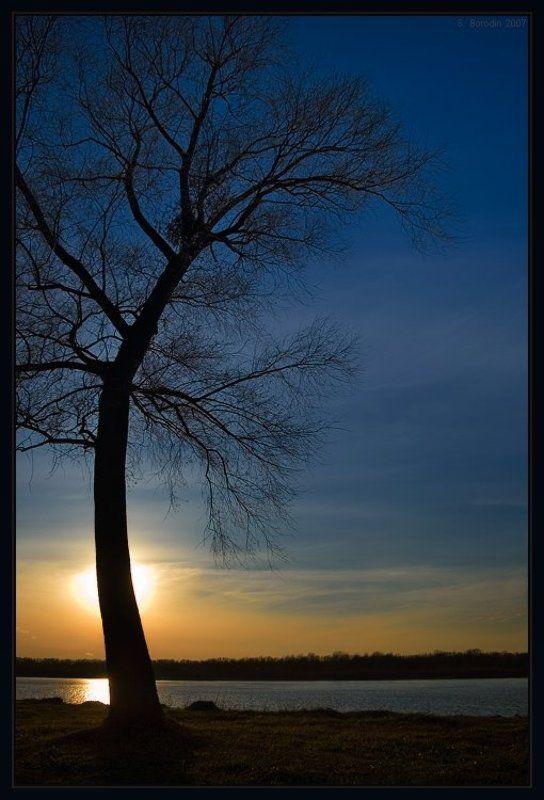 красивое дерево река обь Реверансphoto preview