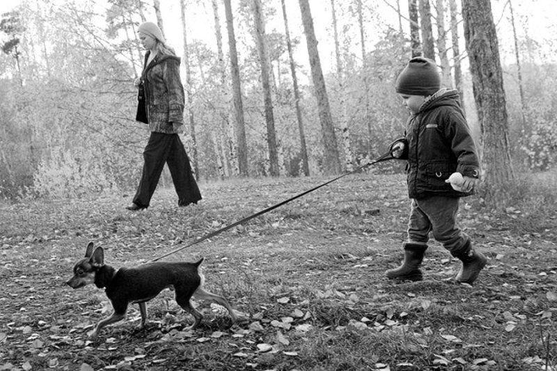 семья, ребенок, собака, прогулка, осень Прогулкаphoto preview