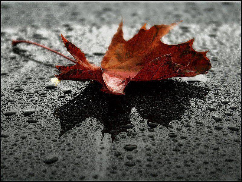 В дождливую осеньphoto preview