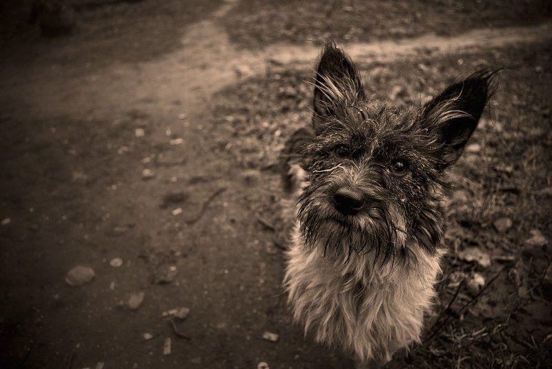 собачонка Собачонкаphoto preview