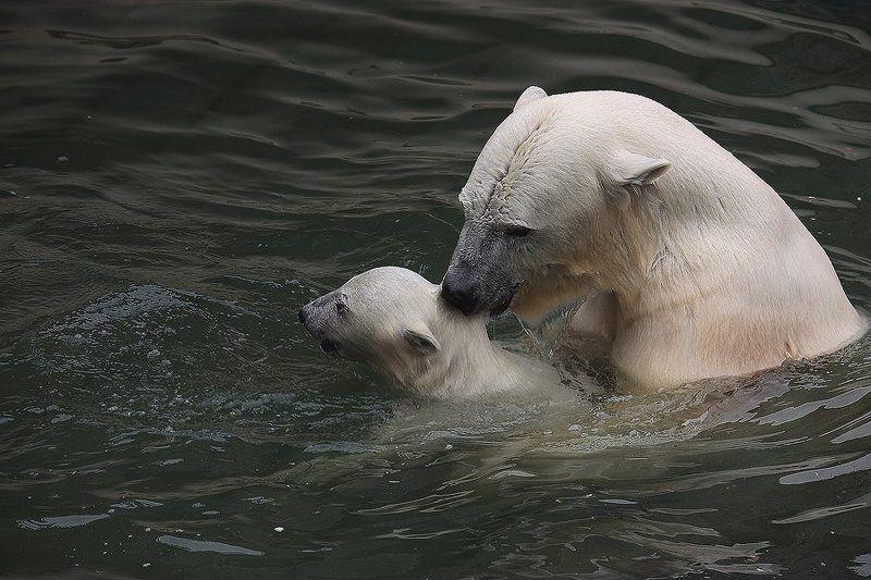 Пора учиться плавать, сынок...photo preview