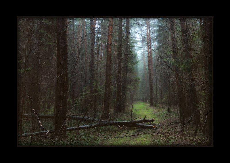 лес, осень, распутица, поздняя осень осеньюphoto preview