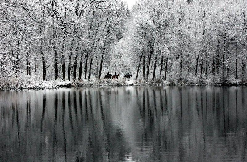 зима,снег, лес, природа, озеро, лошади, первый снег,ноябрь,парк,пруд. Прогулкаphoto preview