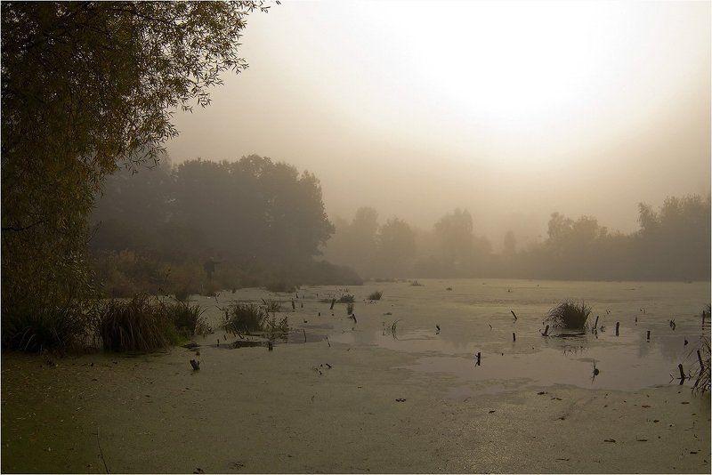 Утро туманное, ...photo preview