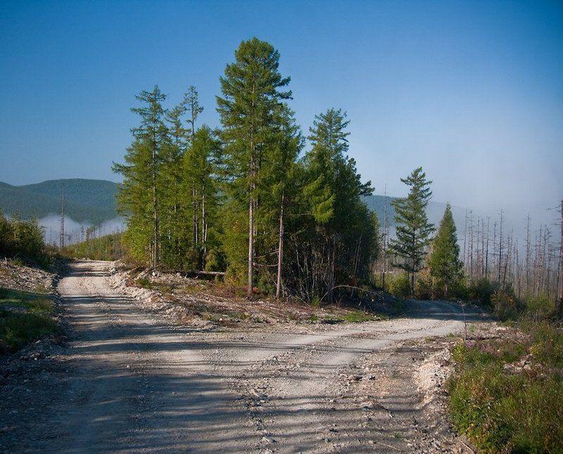 тайга, пейзажи, август 2010, софийск, хабаровский край две дороги в тайге? не страшно - сойдутсяphoto preview