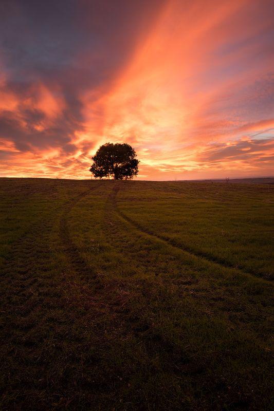 Lonley treephoto preview