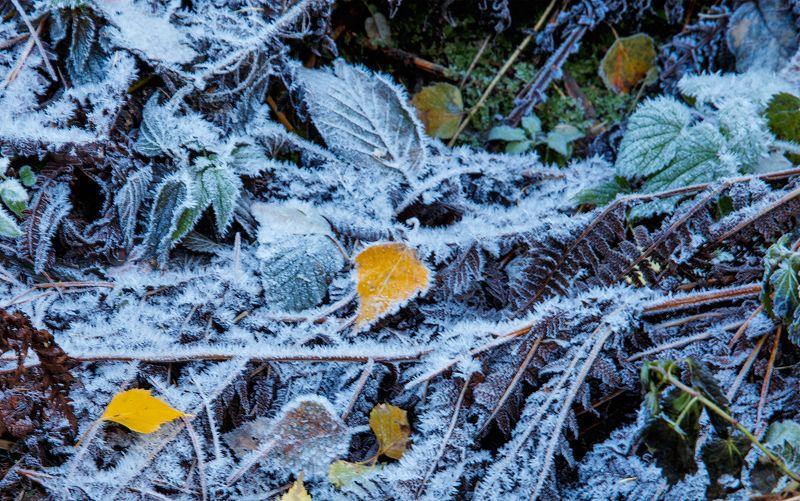 Скоро зима.photo preview