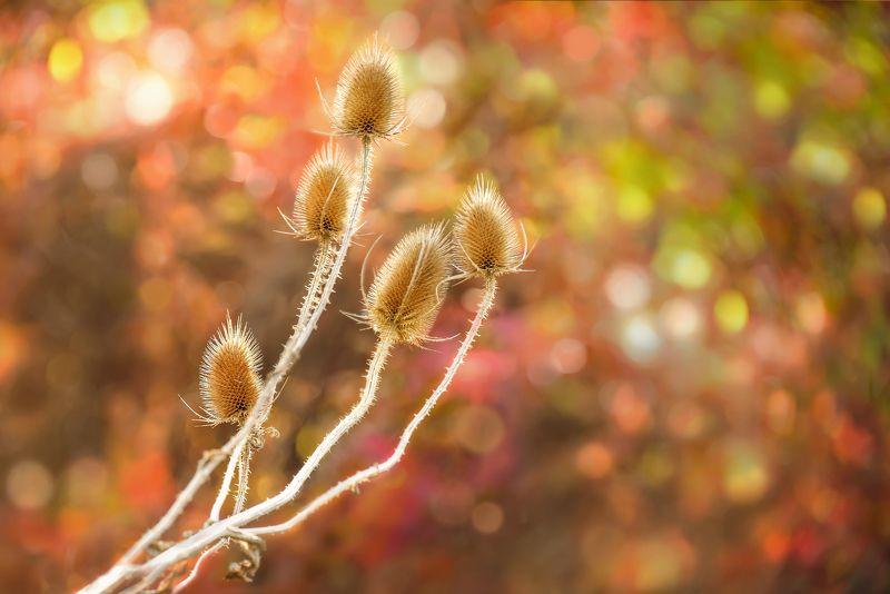 Цвета осениphoto preview