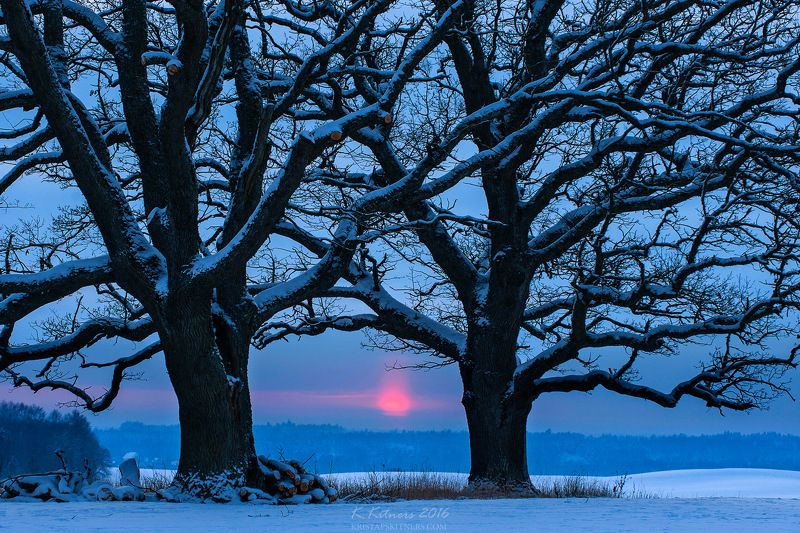 snow oak tree blue white winter sky clouds latvia landscape field sun sunset cold The Old Brothersphoto preview