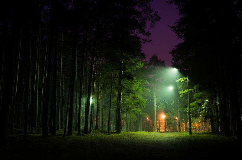 фото, природа, лес, дубна, россия Туманная тишинаphoto preview