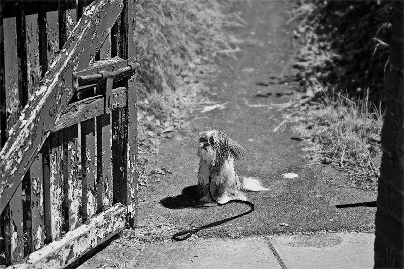 собака, забор, станция, ворота, ирландия Непонятный кто-тоphoto preview