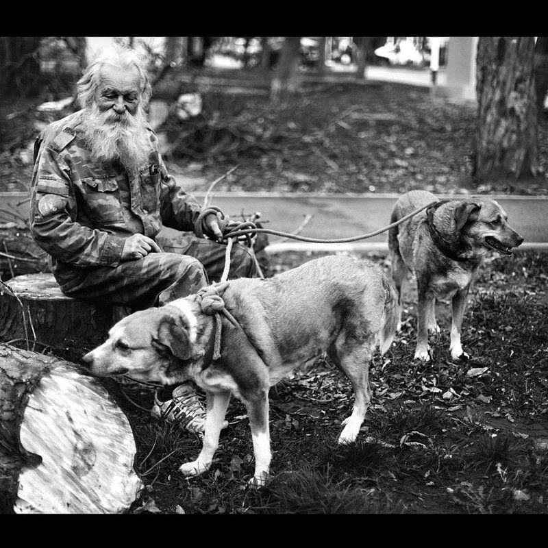 О собаках и Толстомphoto preview
