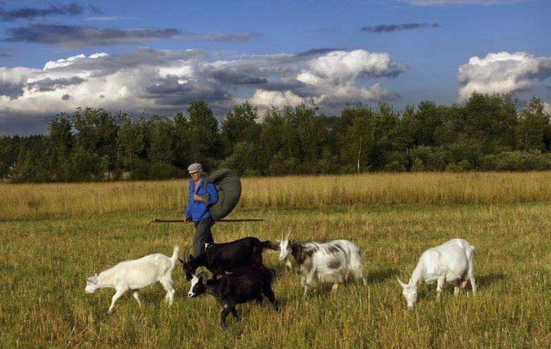 Время пасти коз (2007)photo preview