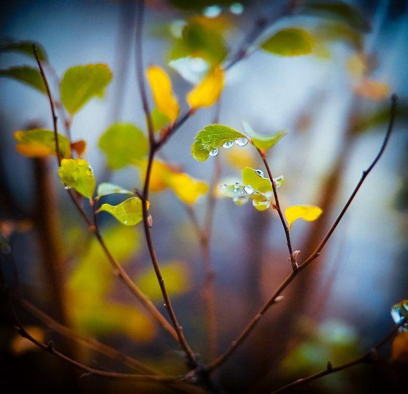 капли, дождь, листья, осень капельноеphoto preview