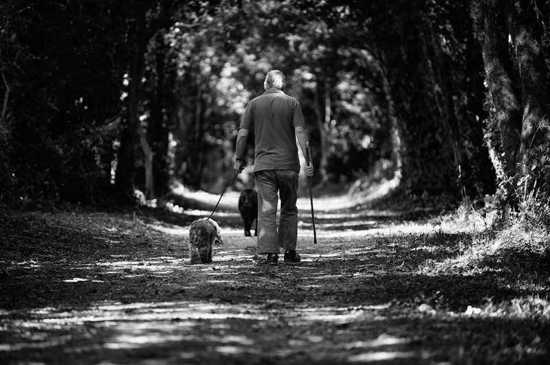 собака, мужчина, тропинка, парк, прогулка Хозяин, я так к тебе привязан...photo preview