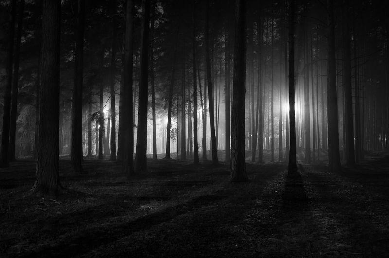 фото, природа, лес, дубна, россия Прогулки в туманеphoto preview