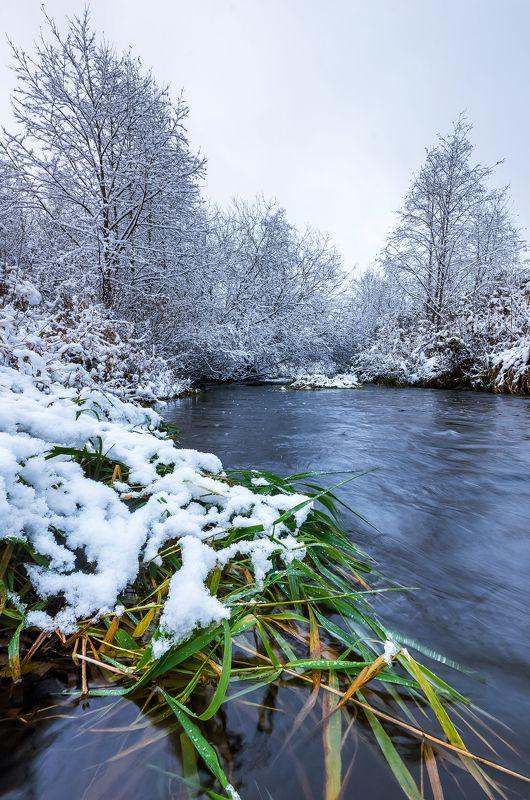 река, трава, снег, зима, рыбинск, деревья Зеленая, зеленая траваphoto preview