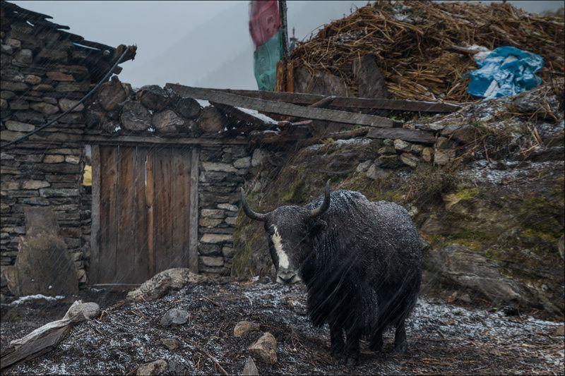 непал, manaslu ***photo preview