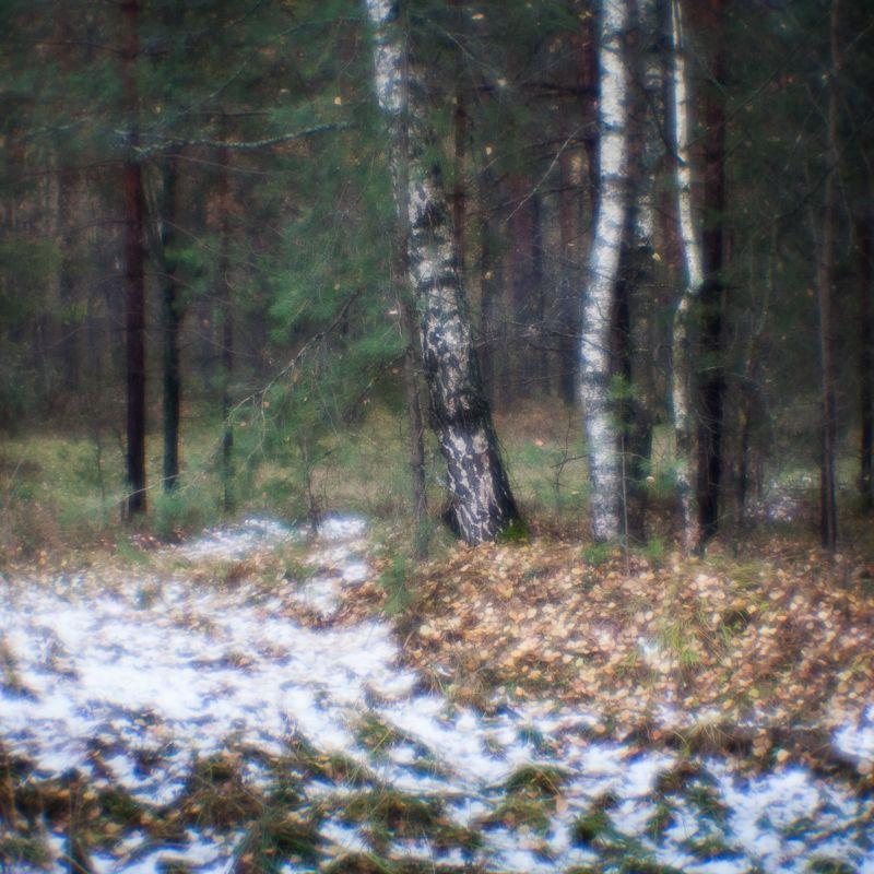 фото, монокль, природа, лес, березы, пикториализм, monolens Первый снегphoto preview