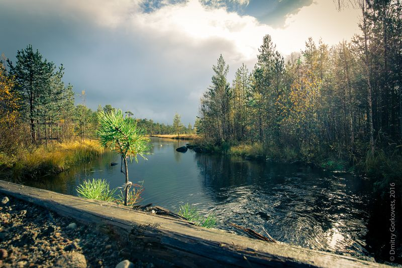 #карелия #пейзаж #karelia #landscape #photobydmitrygorkovets Безымянный ручей. Noname stream. Karelia. Russia, autumn 2017.  photo preview